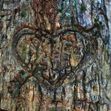 treeheart_8047cn