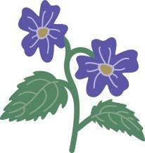 violet_5544c